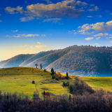 Pine trees near valley in mountains  on hillside under sky with Stock Photo