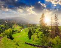 Pine trees near valley in mountains at sunset. Mountain summer landscape. pine trees near meadow and forest on hillside under  cloudy sky at sunset Stock Images
