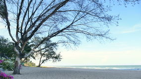 Pine trees over beach, pine branch for frame with sea and sky for background cha-am thailand.  stock video footage
