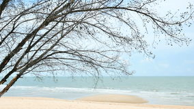 Pine trees over beach, pine branch for frame with sea and sky for background cha-am thailand.  stock footage