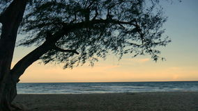 Pine trees over beach, pine branch for frame with sea and sky for background,on evening time cha-am thailand.  stock footage