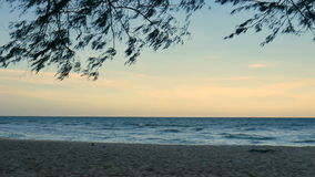 Pine trees over beach, pine branch for frame with sea and sky for background,on evening time cha-am thailand stock video footage