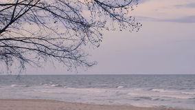 Pine trees over beach, pine branch for frame with sea and sky for background,on evening time cha-am thailand stock footage