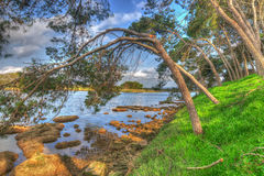 Pine trees over the water in Lake Calik Stock Photography