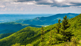 Pine trees and overlook of the Blue Ridge Mountains in Shenandoah National Park Stock Photos
