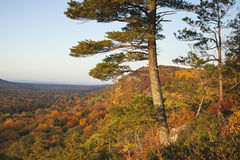 Pine Trees Overlooking Bluffs and a Valley with Autumn Colors in Royalty Free Stock Photo
