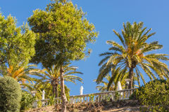 Pine trees and palm trees in Spain against blue sky. Landscape, tree tops of pine trees and palm trees on mediterranean sea in Majorca in Spain against blue sky Stock Image