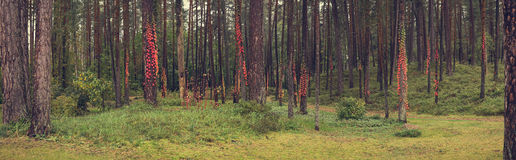 Pine trees in park Stock Photography