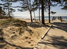 Pine trees in a park on the sandy beach of the Baltic Sea in Palanga, Lithuania stock photos