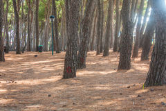 Pine trees park on Seashore of city Alba Adriatica in Italy, nature background. Stock Photos