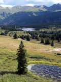 Pine Trees & Ponds. High altitude meadow in a valley of the Colorado Rocky Mountains royalty free stock image