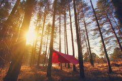 Pine trees and red hammock with tent in spring wood Royalty Free Stock Photo