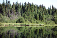 Pine trees reflected in a lake at banff national park Stock Photos