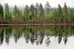 Pine trees reflected in tarn Stock Images
