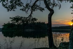 Pine trees reflecting on the calm waters of the Saimaa lake in t. He Kolovesi National Park in Finland - 12 stock images