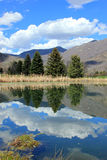 Pine trees reflecting on a pond Stock Photo