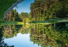 Pine trees. Reflection in water. Pine trees on the shore of the lake. Reflection in water Stock Photos