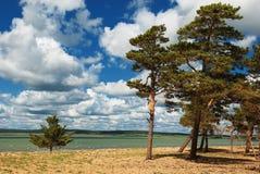 Pine trees beside river Stock Photo