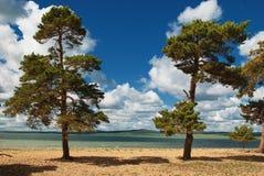 Pine trees beside river Stock Photos