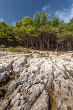 Pine trees on rock in Croatia Royalty Free Stock Photo