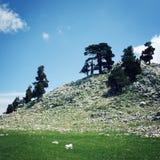 Pine trees and rocks. Aged photo. Mountain Valley near Tahtali Dagi, Turkey. Royalty Free Stock Images