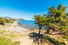 Pine trees and rocks in Punta Moros Stock Photos