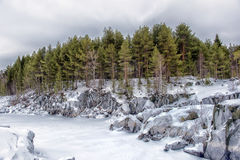 Pine trees and rocks in winter Stock Image