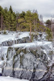 Pine trees and rocks in winter Royalty Free Stock Images