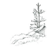 Pine trees and rocks Royalty Free Stock Photos