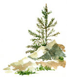 Pine trees and rocks Royalty Free Stock Photography