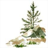 Pine trees and rocks Stock Image