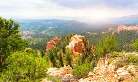 Pine trees on rocky mountains at  Bryce Canyon. National Park, Utah USA Stock Images