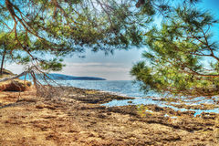 Pine trees by the rocky shore Royalty Free Stock Images