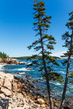Pine Trees by Rocky Shore Royalty Free Stock Image