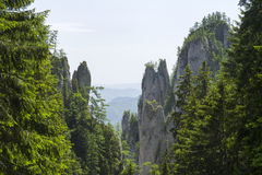 Pine trees on rocky walls. Summer forest landscape Royalty Free Stock Photography