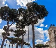 Pine trees in Rome, near Piazza Venezia Royalty Free Stock Photography