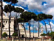 Pine trees in Rome, near Piazza Venezia Royalty Free Stock Photos