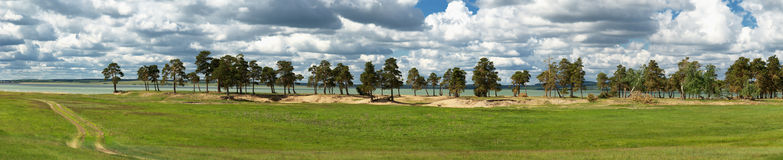 Pine trees in a row on the river Royalty Free Stock Image