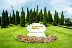 Pine trees in  the royal flora  garden chiangmai Thailand Stock Image