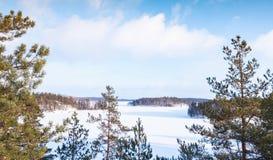 Pine trees on Saimaa lake coast. Rural winter landscape, Finland royalty free stock photo