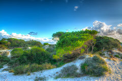 Pine trees and sand dunes in Maria Pia at sunset Stock Image