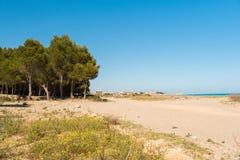 Pine trees on a sandy beach in L`Hospitalet de l`Infant, Tarragona, Catalunya, Spain. Copy space for text. Stock Photos