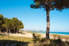 Pine trees on a sandy beach in L`Hospitalet de l`Infant, Tarragona, Catalunya, Spain. Copy space for text. Royalty Free Stock Photos