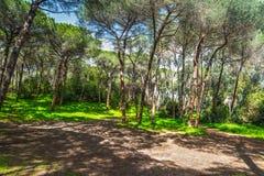 Pine trees in Sardinia Royalty Free Stock Photo