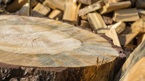 Pine trees sawn on a pile Stock Photography