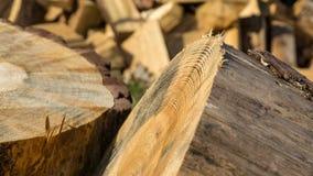 Pine trees sawn on a pile Royalty Free Stock Photos