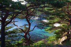 Pine trees and the sea. Removed napoluostrove George Gamow Primorsky Krai, Russia Stock Image