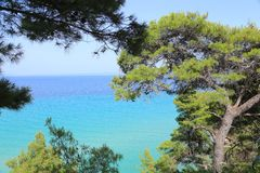 Pine trees and the sea Stock Photo