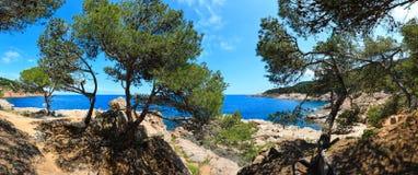 Pine trees on sea coast. Royalty Free Stock Photography