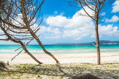 Pine trees by the sea in Sardinia Royalty Free Stock Photos